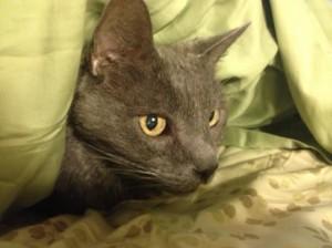 cat green sheets