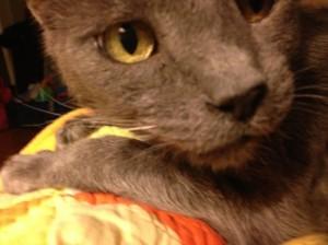 kitty big face