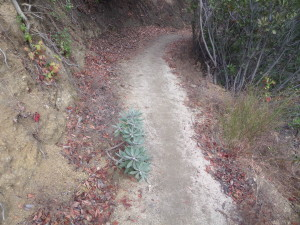 The micro-view, looking down on the trail
