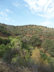 Vegetation around the hills