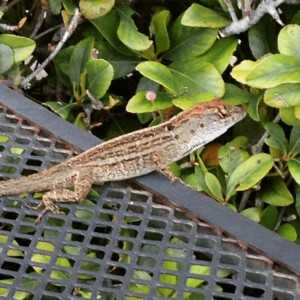 Since the Running Zone mascot is a lizard, it made sense, right?