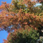 Legend…of the fall, er, autumn!