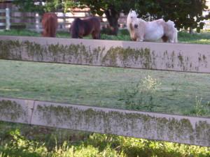 Not wild, but still horses