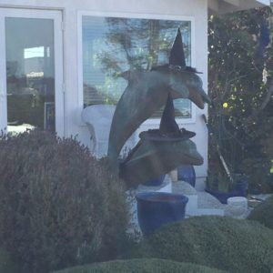 Neighborhood dolphins, decked out for Halloween!