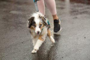 Happy running doggo!